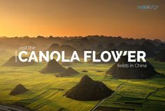 This quiet area of Yunnan County annually transforms into an unbelievable sea of yellow flowers. Luoping County is quiet for most of the year until the canola flowers bloom, and then the area of Yunnan, China, is reborn into a vibrant natural spectacle of yellow flowers #bucketlist #travel #china #valleyof flowers #canola #flowers
