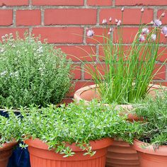 How to Plant a Thriving Herb Garden: Are you sick of watching bundles of leftover herbs languishing in your crisper?