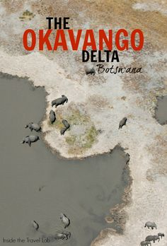 An Okavango Delta Safari Botswana - Africa's Greatest Wilderness? Africa Destinations, Top Travel Destinations, Nightlife Travel, Holiday Destinations, African Holidays, Wildlife Safari, Jungle Safari, Okavango Delta, Viewing Wildlife