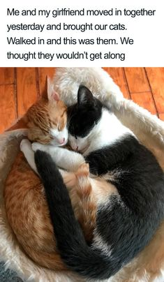 Surprise Bonus Round: Extra Cat Pics That Delivers The Smiles - World's largest collection of cat memes and other animals Cute Funny Animals, Cute Baby Animals, Cute Cats, Funny Cats, Adorable Kittens, I Love Cats, Crazy Cats, Beautiful Cats, Animals Beautiful