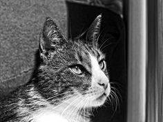 #Caturday(6)