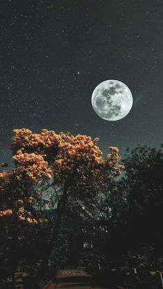 Moon Stars and Trees iPhone Wallpaper - iPhone Wallpapers