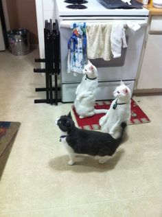 Awesome! My Cats made theBerry.com and onto Pinterest! I love my weird cats.