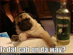 shasta anne: Pug Funnies!