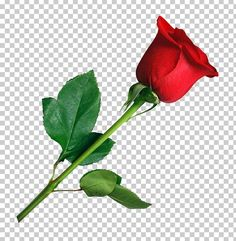 Wedding Background Images, Photo Background Images Hd, Studio Background Images, Background For Photography, Flower Images Hd, Rose Flower Pictures, Rose Images, Red Rose Png, Rose Flower Png