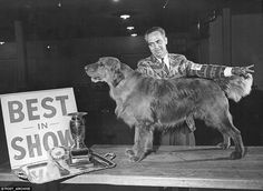 A four-year-old golden retriever wins in Colorado in 1965