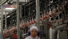 Chile, China e Egito anunciam retomada da importação de carne brasileira. O Chile decidiu retirar a suspensão total à importação da carne brasileira, mas ma