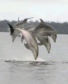It is believed that dolphins are the second smartest animal on earth- just after humans. so why do we still keep them in little tanks to perform silly tricks for us? The Ocean, Ocean Life, Orcas, Reno Animal, Beautiful Creatures, Animals Beautiful, Dolphin Photos, Bottlenose Dolphin, Water Animals