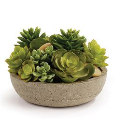 Another great find on #zulily! Mixed Succulent Pot by Napa Home & Garden #zulilyfinds