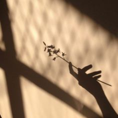 Oh! What and astheticly pleasing shadow! Beige Aesthetic, Aesthetic Pastel, Vsco, Shadow Photography, Love Photos, Aesthetic Pictures, Creative Decor, Fort Ideas, Design