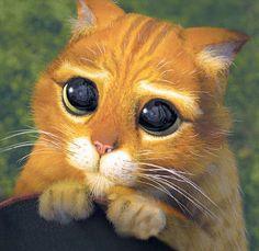 """je l'ai retrouvé !... voilà ce que j'appelle """"un air de Chat Potté"""" !... franchement, vous pouvez résister, vous ?!?... moi, pas !!! (en plus, Reg a très, très, très bien compris le truc et le fait à la perfection !!! même si TOUS les chats savent faire, il faut reconnaître que, pour ça, il est VRAIMENT doué !!!... et moi... j'ai beau le savoir... je craque !!! ça marche à tous les coups !!!)"""