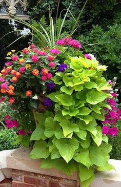 Beautiful Container Garden with spikes, pink geranium, lantana, violet and magenta petunias, and cascading sweet potato vine.