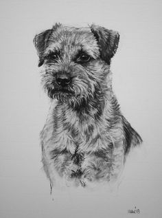 Border Terrier dog fine art Limited Edition print from an original charcoal drawing