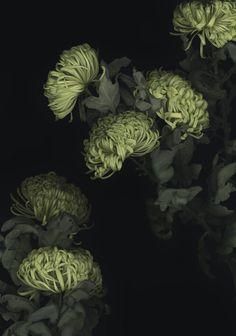 Luzia Simons 'Floral Worlds' – Luzia Simons / VG Bild-Kunst, Bonn Green Flowers, Beautiful Flowers, Night Garden, Floral Photography, Kew Gardens, Botanical Art, Belle Photo, Shades Of Green, Planting Flowers
