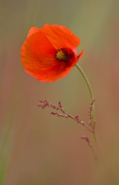 """""""I love seeing these bloom in the desert."""""""