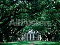 Oak Alley Plantation in Mississippi River Valley by Timothy Easton Landscapes Photographic Print - 61 x 46 cm