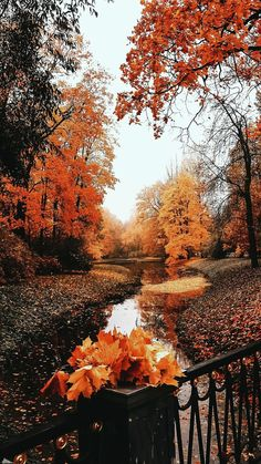 List of Beautiful Fall Wallpaper for iPhone 11 Pro Max Cute Fall Wallpaper, Halloween Wallpaper, Halloween Backgrounds, Iphone Wallpaper Fall, Fall Leaves Wallpaper, Fall Background Wallpaper, Fall Leaves Background, Screen Wallpaper, Background Images