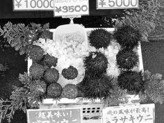 Fresh Sea Urchin in Hokkaido