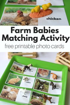 FREE printable farm animal photo cards and farm matching activity for preschool. Fun hands on activity for a farm theme at preschool.