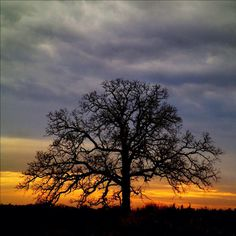 THAT TREE, Day 258 : December 6, 2012 by Mark Hirsch #that_tree