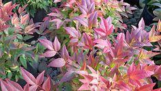 Born at Briggs™: Winter Foliage Color