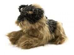 Heavenly Pals are urns for pet after it passes Pet Urns, Metal Containers, Yorkie, Heavenly, Plush, Fur, Dogs, Animals, Animais