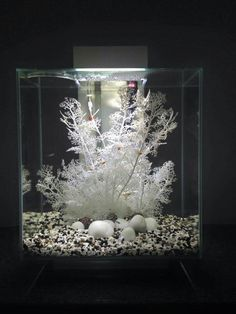 Home Aquarium Ideas: The Aquarium Buyers Guide Fluval Edge                                                                                                                                                                                 More