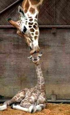 I love this mother /baby kiss!