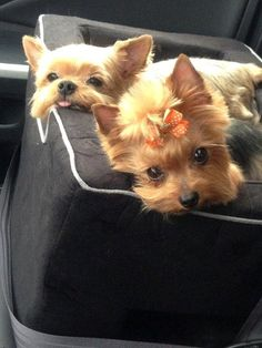 Riley & Lillie