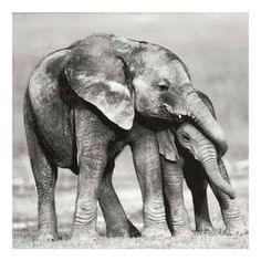 Elephants live with their daughters for life #momsday #motherlylove #fam