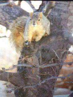 Colorado squirrel! By Courtney Castrey
