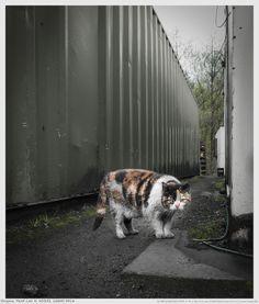 Engine Yard Cat