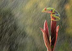 Rainy day by Andiyan Lutfi on 500px