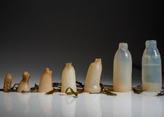 Iceland Academy of the Arts student Ari Jónsson premiered an algae water bottle made from agar at DesignMarch. The bottle biodegrades when the user is finished, minimizing plastic pollution. Biodegradable Plastic, Biodegradable Products, Biodegradable Packaging, Edible Water Bottle, Water Bottles, Design Package, Eco Design, Plastic Design, Plastic Pollution