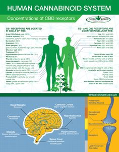 Image result for cbd infographic