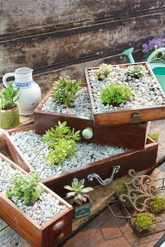 Nicely planted - garden magic- Schick gepflanzt – Gartenzauber Plants in drawers Diy Garden Projects, Diy Garden Decor, Garden Ideas, Diy Jardin, Hydrangea Care, Decoration Plante, Deco Floral, Garden Types, Plantar