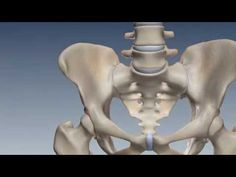The Ultimate Pelvic Anatomy Resource: Articles, Links, and Videos, Oh My! | Pelvic Guru