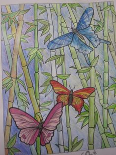 Dover Butterfly Coloring Book