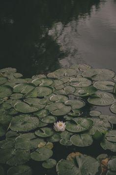 Dark lily pads :)