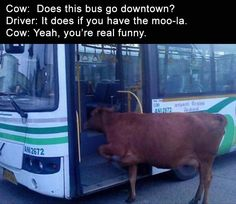 Find very good Jokes, Memes and Quotes on our site. Keep calm and have fun. Funny Pictures, Videos, Jokes & new flash games every day. Funny Animal Photos, Animal Memes, Funny Photos, Funny Animals, Animal Humor, Adorable Animals, Humorous Pictures, Animal Captions, Farm Animals