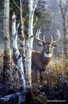 """A lone buck is standing alert near a group of white birch trees in Don Kloetzke's wildlife art print TIMBER'S EDGE. This open edition print comes in an unframed image size of 8"""" x 12""""."""