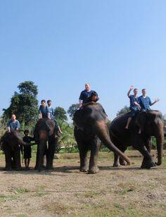 Elephant Trekking in Chiang Mai - Baan Chang Elephant Park Bull Elephant, Elephant Park, Elephant Ride, Thailand Honeymoon, Thailand Travel, Elephant Trekking, Thailand Adventure, Cultural Experience, Chiang Mai