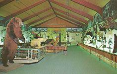 Fred Bear Museum, Grayling, Michigan-1980 (Don Harrison, via Flickr) Fred Bear Bows, Grayling Michigan, Otsego Lake, Houghton Lake, Indian River, Detroit Michigan, Northern Michigan, Bow Hunting, Wildlife Art