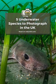 What wildlife species can be photographed underwater in the UK? In this underwater photography guide find out some of the best. Wildlife Photography Tips, Photography Basics, Photography Tips For Beginners, Photography Tutorials, Photography Photos, Travel Photography, Underwater Photos, Underwater Photography, Macro Photography