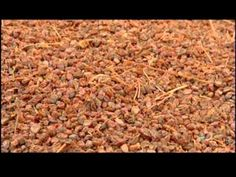 ▶ How Its Made - Raisins - YouTube