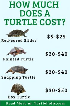 Are you interested in the cost of a turtle? This post shows how much a pet turtle costs Adopt A Turtle, Pet Turtle, Common Snapping Turtle, Musk Turtle, Types Of Turtles, Turtle Care, Wood Turtle, Living In Brazil, Aquatic Turtles