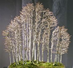 Bonsai Forest without leaves   img_0732.jpg (2408×2241)