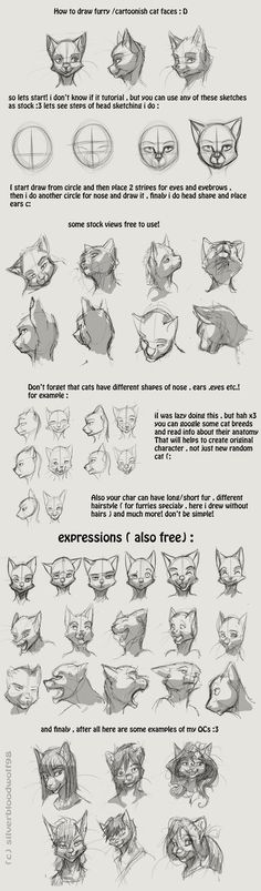 furry / cartoon cat head tutorial by Silverbloodwolf98