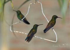 Never thought of a coat hanger as a hummingbird perch.