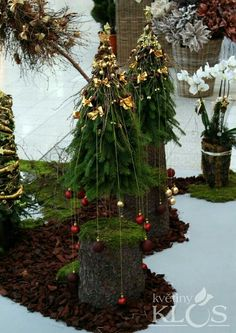 Trees and Festive Planters
